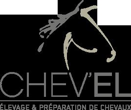 Présentation de Chev'el | Elevage Et Préparation De Chevaux