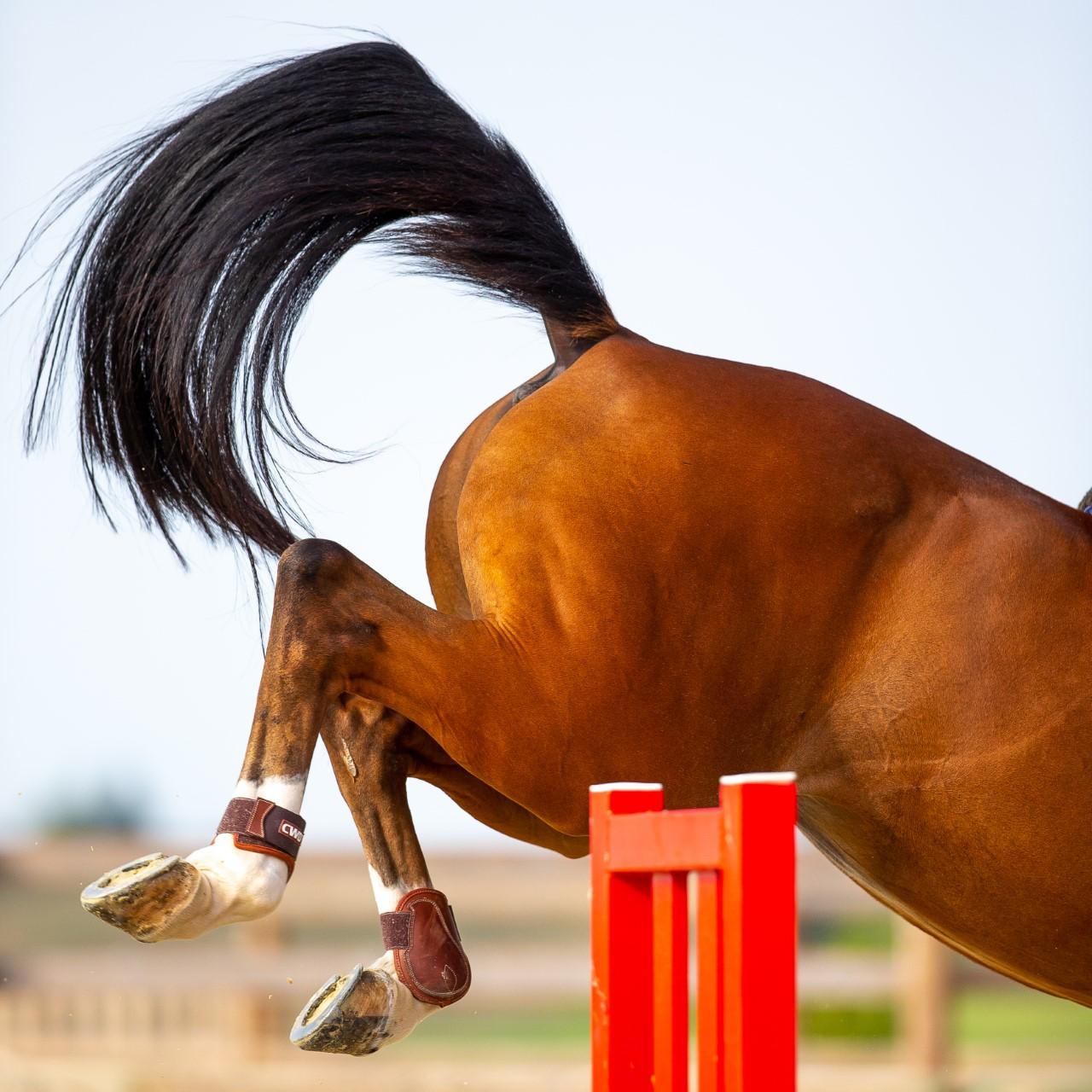 Cheval en saut